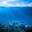 Acidité des océans, vers une extinction massive des espèces ?