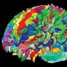 En vidéo : 4 choses étranges que nous savons sur le cerveau humain grâce à l'IRM