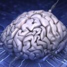 A-l-instar-des-ordinateurs-le-cerveau-humain-peut-il-recuperer-des-souvenirs-perdus