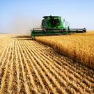 """Climat: face au réchauffement, l'agriculture doit se """"diversifier"""" (expert)"""