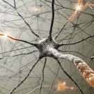 Combien de temps faut-il au cerveau pour passer « en mode conscient » ?