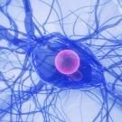 Perturbateurs endocriniens : comment nous mettent-ils en danger ?