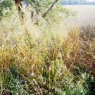 La bioélectricité offre un meilleur ratio de « kilomètres par hectare » que l'éthanol