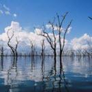 La lutte contre le réchauffement ne passe pas seulement par la réduction des émissions de CO2