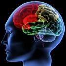[Vidéo] « Neuromarketing : une nouvelle façon de concevoir la conscience du consommateur »