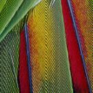 La structure des plumes inspire la conception de nouveaux lasers