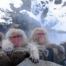 Japon : Vers une exploitation du potentiel géothermique de l'archipel