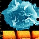 ALLEMAGNE : Controverse sur l'étude par BASF des effets de nanomatériaux sur la santé