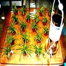 Epuration de l'air intérieur par les plantes en questions