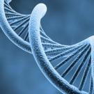 Une méthode en or pour ouvrir l'ADN en deux