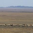 Le désert de Gobi, nouvel eldorado pour l'éolien?