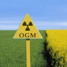 OGM : l'autorité européenne rejette définitivement l'étude Séralini