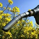 Bioéthanol à base de betterave, un atout pour la France ?