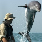 Les-dauphins-licencies-des-robots-embauches