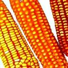 Agricommand, la réglementation agroalimentaire en un clic