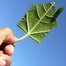 Comprendre les certificats d'économie d'énergie