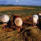 Lorsque les satellites assurent la sécurité alimentaire mondiale