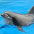 Le dauphin a une mémoire d'éléphant