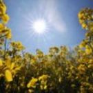 Quand les biocarburants dopent les prix de l'alimentation
