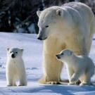 Le volume de la banquise arctique a augmenté de 1400 km3 entre août 2012 et août 2013