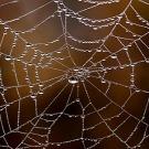 Surprenante soie d'araignée