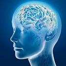 L'exposition aux PCB réduit les capacités intellectuelles