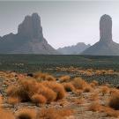Etude sur la production de biocarburant à base de plantes du désert et d'eau de mer