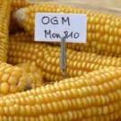 Le Sénat est-il pro-OGM ?
