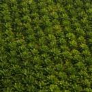 La population mondiale peut-elle se passer de l'huile de palme ?