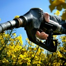 Les biocarburants font-ils monter les prix des matières premières ?